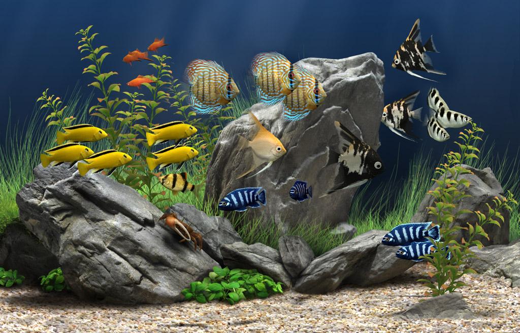 Скачать ключ для dream aquarium