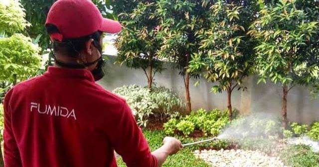 Tips Usir Rayap Dari Jasa Anti Rayap Surabaya