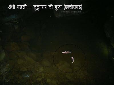 Blind fish Kotumasar Gufa