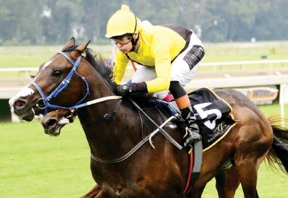 Tilbury Fort - Horse - Vodacom Durban July - Horse Racing