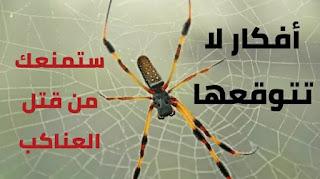 أفكار لا تتوقعها ستمنعك من قتل العناكب التي تعيش داخل منزلك