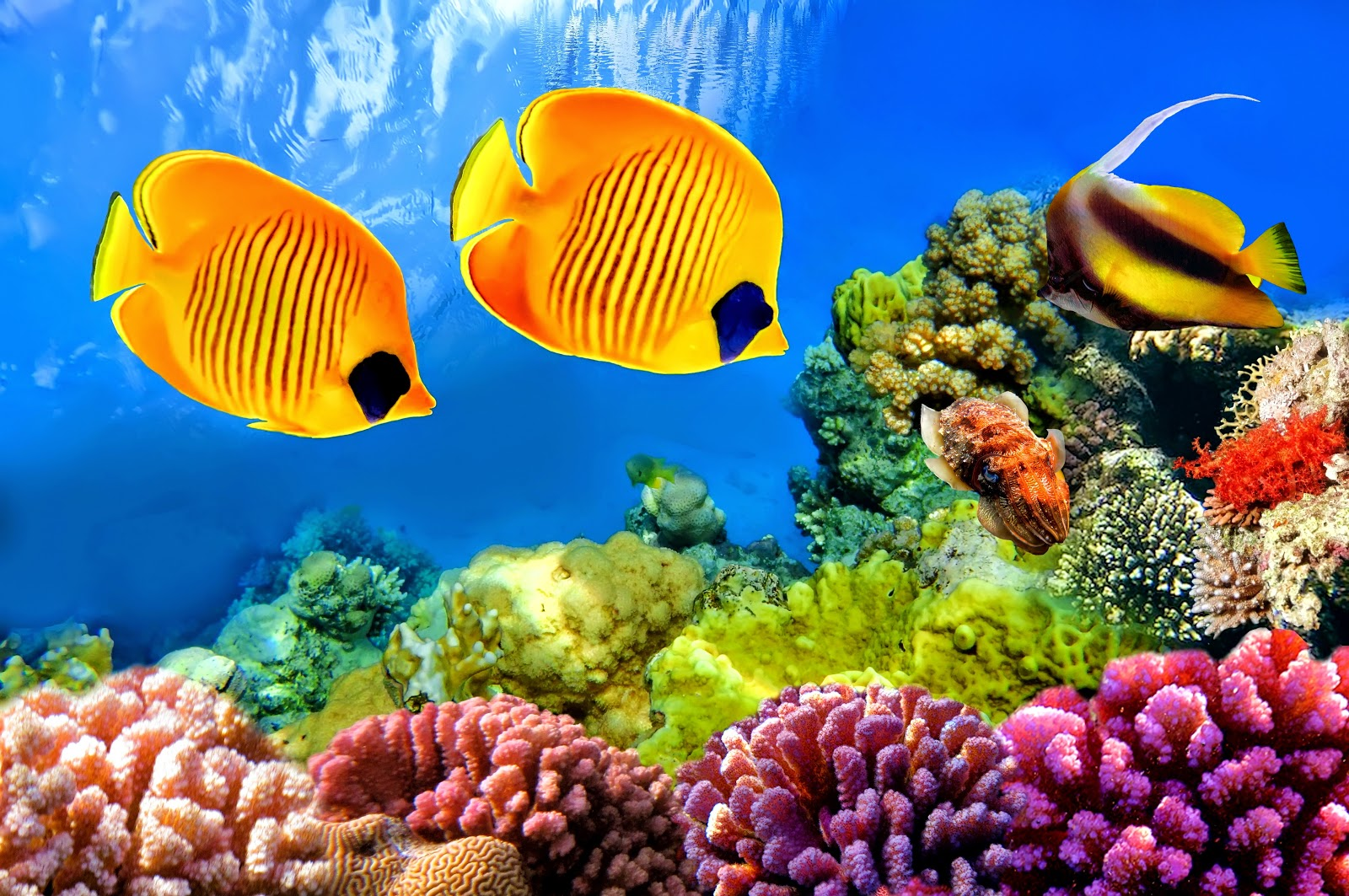 Coral Reef Fish - HD Wallpapers | Earth Blog