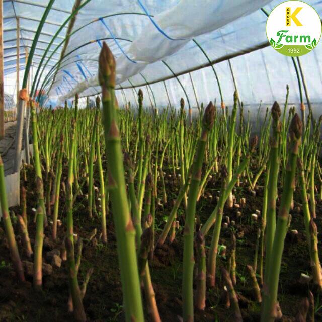 Cách trồng măng tây bằng hạt