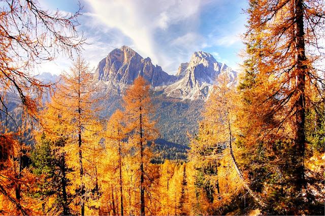 foliage autunno cortina