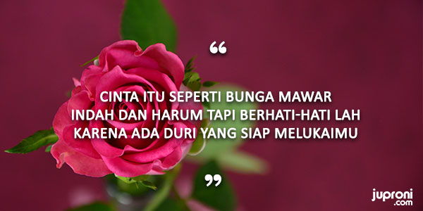 50 Kata Kata Mutiara Caption Tentang Bunga Juproni Quotes
