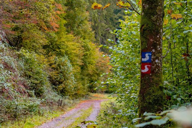 Wildwiesenweg – Eitorf | Wandern in der Naturregion-Sieg | Erlebniswege Sieg 07