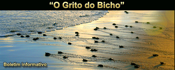"""O GRITO DO BICHO"" - Boletim do dia 12.06.2017"