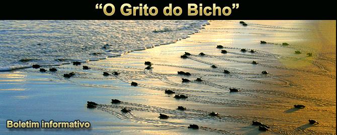 """""""O GRITO DO BICHO"""" - Boletim do dia 12.06.2017"""