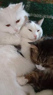 Беседа с кошками