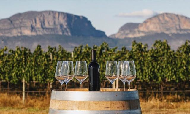 Fazenda na Chapada Diamantina é foco das maiores produtores de vinhos do mundo