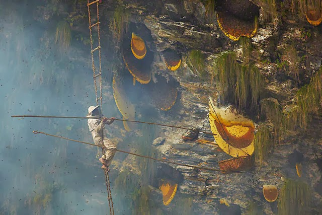 Ancient honey hunting in Nepal
