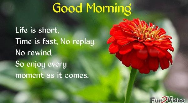 Morning Life Quotes Prepossessing Download Free Good Morning Messages With Quotes And Wishes For