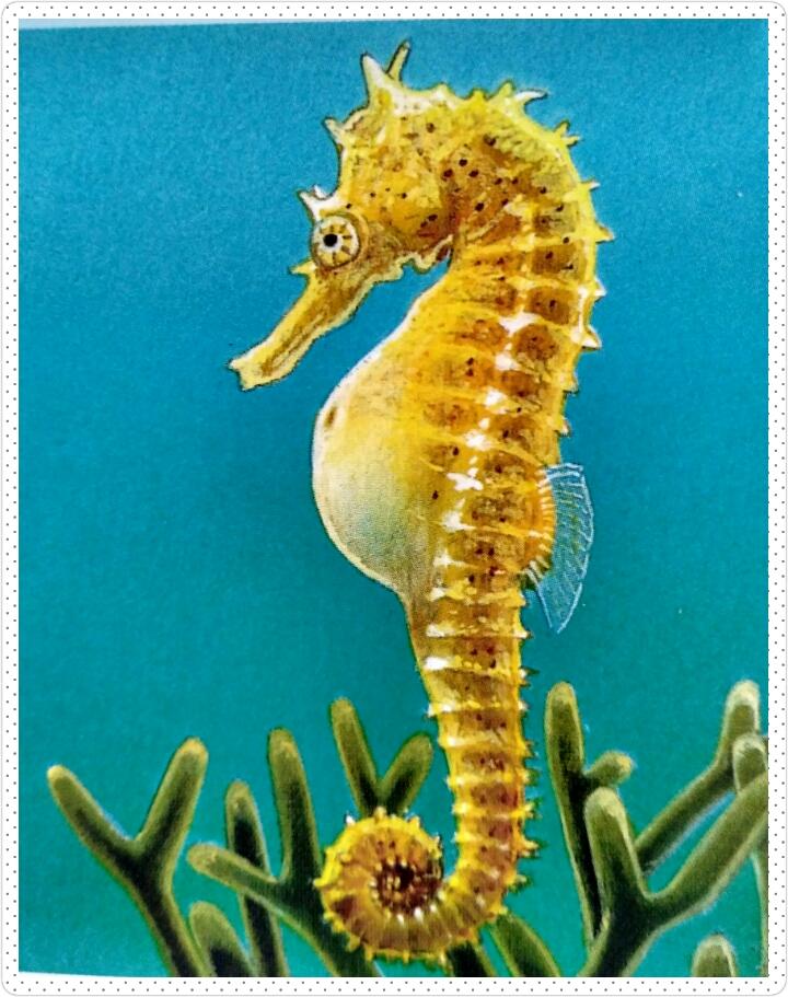 420 Gambar Binatang Kuda Laut Gratis