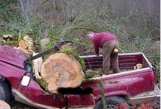 smiješna slika: posečeno drvo slupao automobil
