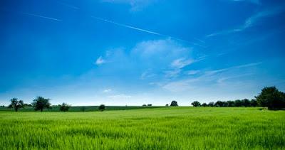 green-field
