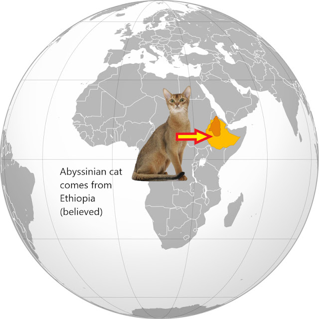 Where do Abyssinian cats come from?