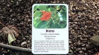 Kou tree information - Diamond Head State Monument trail, Oahu, HI