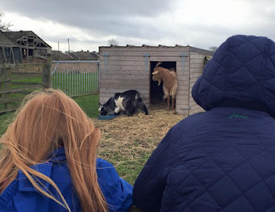 Kids visit the goats on the farm at Moorhouse Farm Shop Stannington, near Morpeth, Northumberland