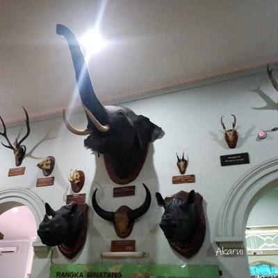kepala-gajah