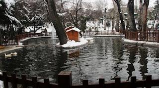 ankara'da gezilecek yerler kuğulu park