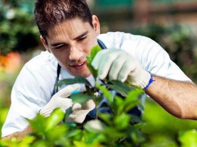 Ζητείται Γεωπόνος Α.Ε.Ι/Τ.Ε.Ι για συσκευαστήριο φρούτων-λαχανικών στο Ναύπλιο