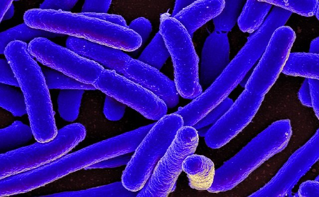 Can bacteria perceive the passage of time?
