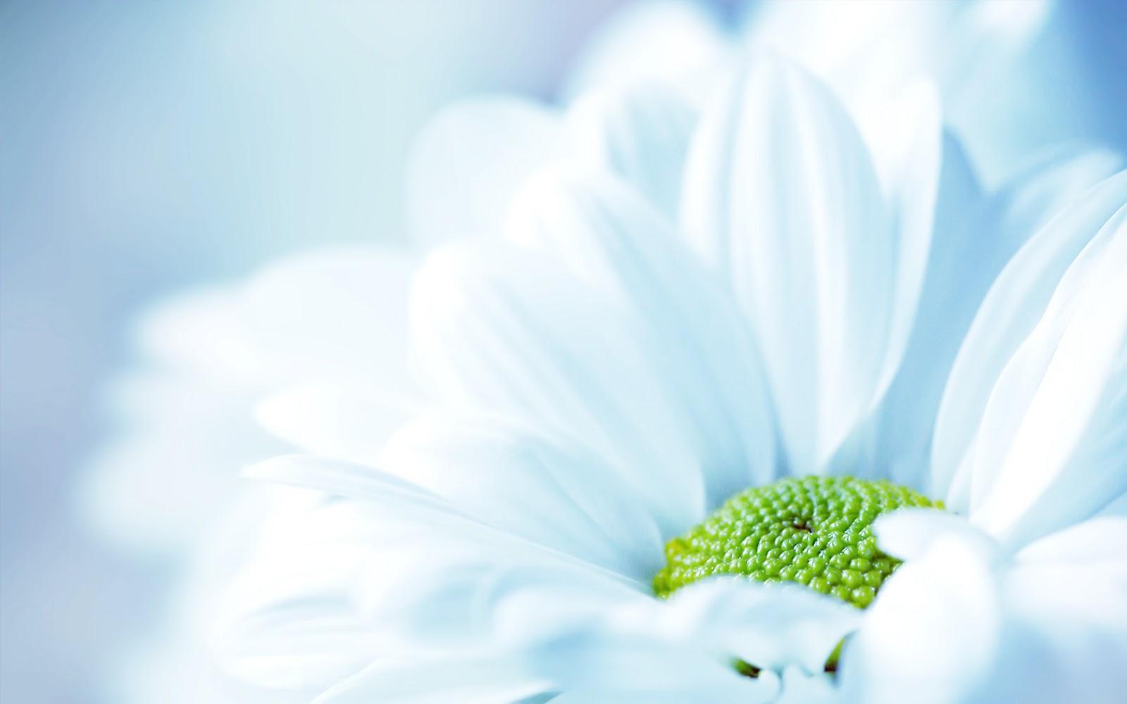 Tips-tips Kesehatan Untuk Anda: 30 Wallpaper Bunga Paling