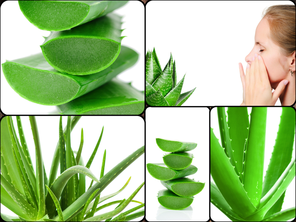 7 Herbs to Fight Joint and Knee Pain