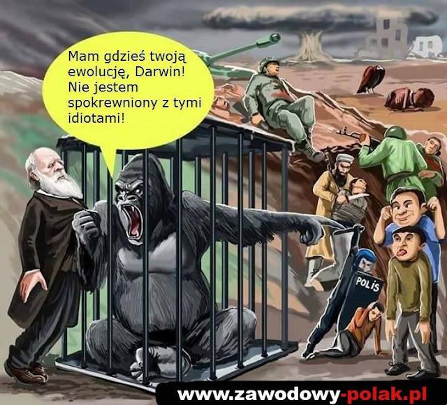 Ewolucja Darwinma zdjęcia