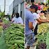 Isang Community Pantry sa San Miguel Bulacan, Nagmistulang palengke  dami ng Gulay!