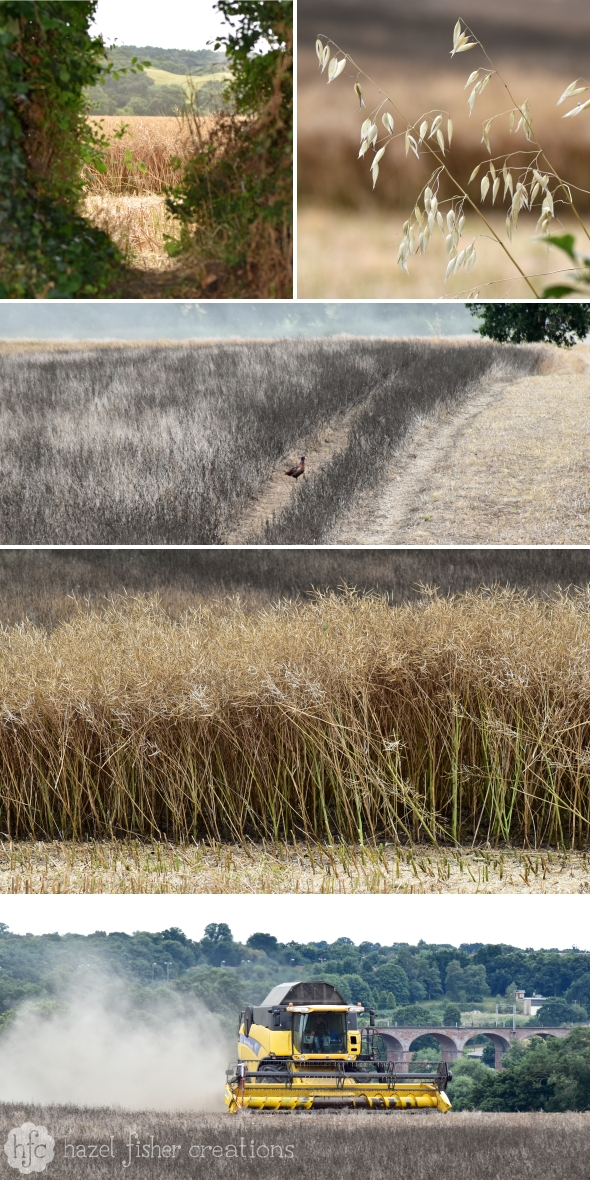 Harvest Time Photography by Hazel Fisher Creations