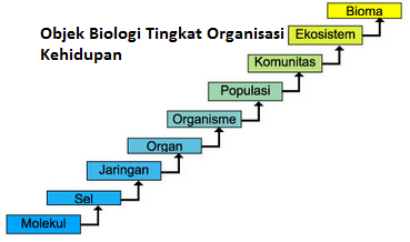 objek biologi struktur tingkat organisasi kehidupan