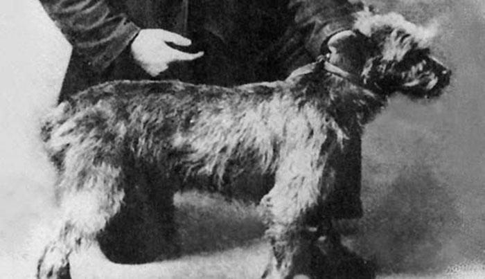 Anjing Graham Bells