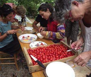 http://www.lepotagerdesante.com/videos/pascal-poot-conservatoire-de-la-tomate-lodeve.html