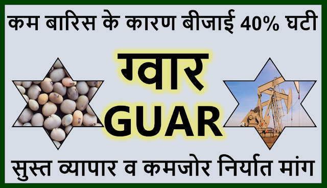 ग्वार की बीजाई पिछले वर्ष के मुकाबले 40% पिछड़ी , Guar sowing area has decreased by 40% in comparison to previous year. ,  Guar, guar gum, guar price, guar gum price, guar demand, guar gum demand, guar seed production, guar seed stock, guar seed consumption, guar gum cultivation, guar gum cultivation in india, Guar gum farming, guar gum export from india , guar seed export, guar gum export, guar gum farming, guar gum cultivation consultancy, today guar price, today guar gum price, ग्वार, ग्वार गम, ग्वार मांग, ग्वार गम निर्यात 2018-2019, ग्वार गम निर्यात -2019, ग्वार उत्पादन, ग्वार कीमत, ग्वार गम मांग, Guar Gum, Guar seed, guar , guar gum, guar gum export from india, guar gum export to USA, guar demand USA, guar future price, guar future demand, guar production 2019, guar gum demand 2019, guar, guar gum, cluster beans, guar gum powder, guar gum price, guar gum uses, ncdex guar, guar price, guar gum price today, cyamopsis tetragonoloba, ncdex guar gum price, guar beans, guar rate today