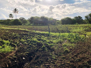 Secretaria de Agricultura realiza ações de corte de terra em várias comunidades rurais