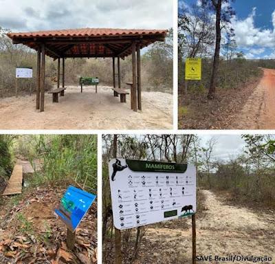 Reserva rolinha do planalto, save brasil, aves do brasil, botumirim, Minas Gerais, cerrado, ornitologia, observação de aves, biologia, passaros, passarinho, rolinha