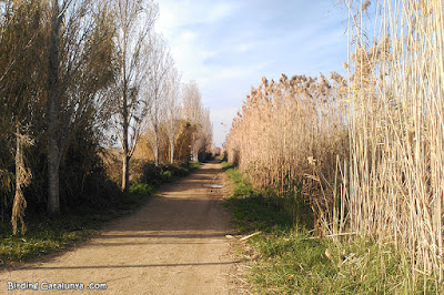 Una de les rutes que ens porta als diferents estanys