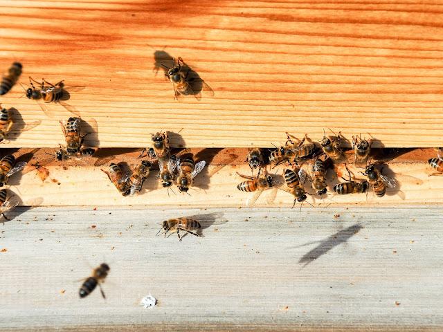 bijen, imkeren