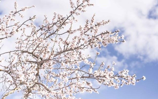 ΗΠΕΙΡΟΣ: Λίγες τοπικές νεφώσεις και με καλές για την εποχή θερμοκρασίες έως και το τέλος της εβδομάδας