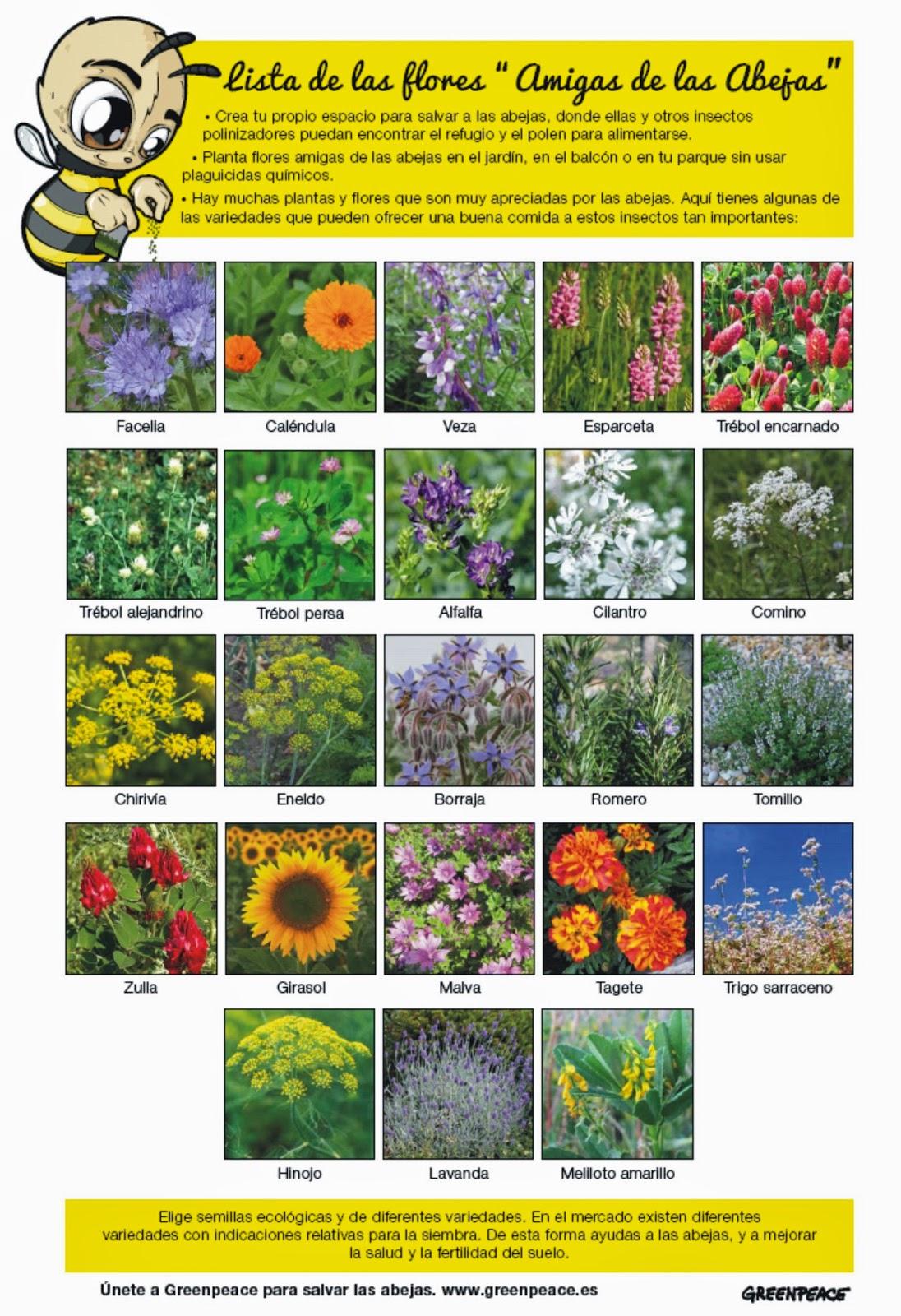 La colmena feliz que podemos hacer for Ahuyentar abejas jardin