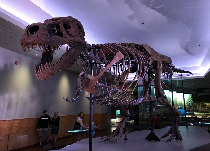 que-ver-sue-field-museum-chicago