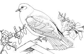 Homer Pigeon On Tree Coloring Pages For Kids Free Color