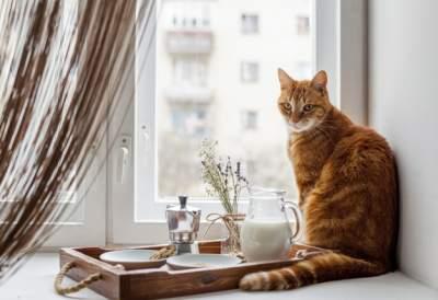 اكل القطط المفضل