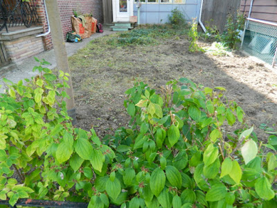 Little Italy Toronto Fall Front Garden Cleanup After by Paul Jung Gardening Services--a Toronto Gardening Company