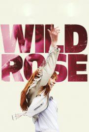 Wild Rose 2018