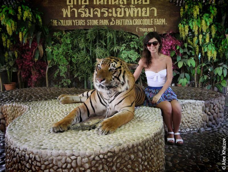 Тигр в Таиланде