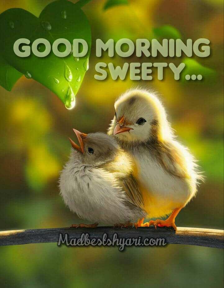 goodmorning beautiful images