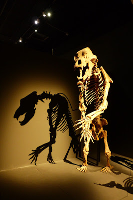 Museum d'histoire naturelle squelette ours des cavernes