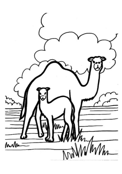 Printable Camel Coloring Pages PDF